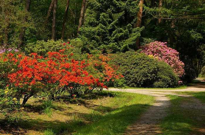 Рододендроновый парк-Westerstede Rhododendronpark. 68089