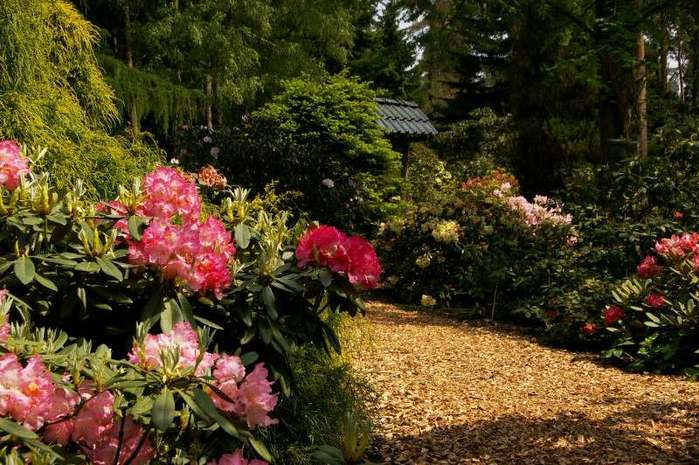 Рододендроновый парк-Westerstede Rhododendronpark. 55581