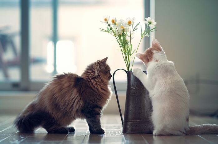 Котик с цветами картинки 5