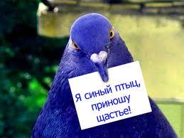 птица синяя фото