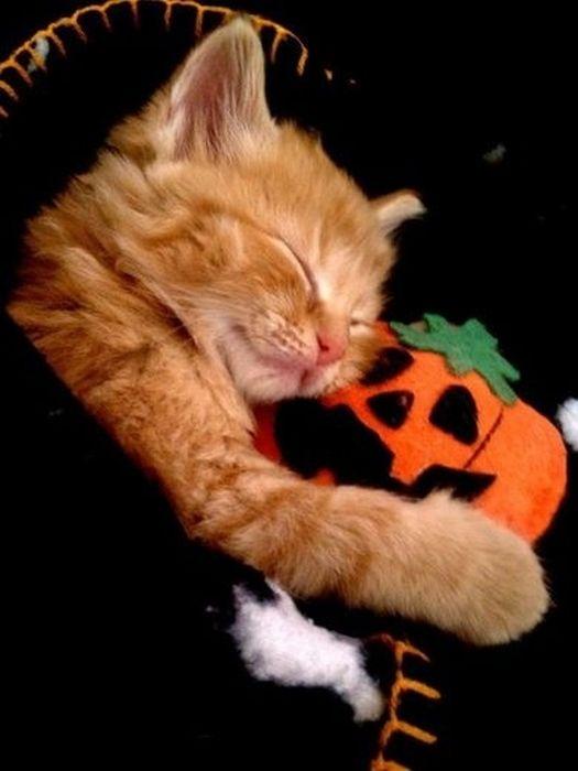 cats_snuggling_22 (525x700, 38Kb)