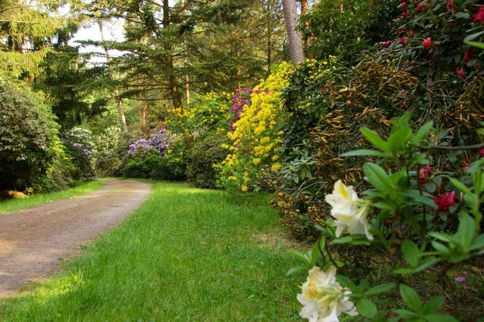 Рододендроновый парк-Westerstede Rhododendronpark. 78819
