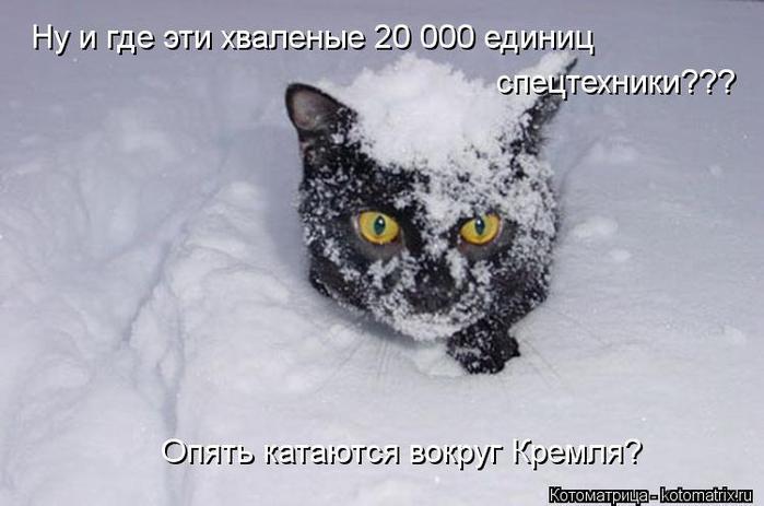 kotomatritsa_jL (700x463, 39Kb)