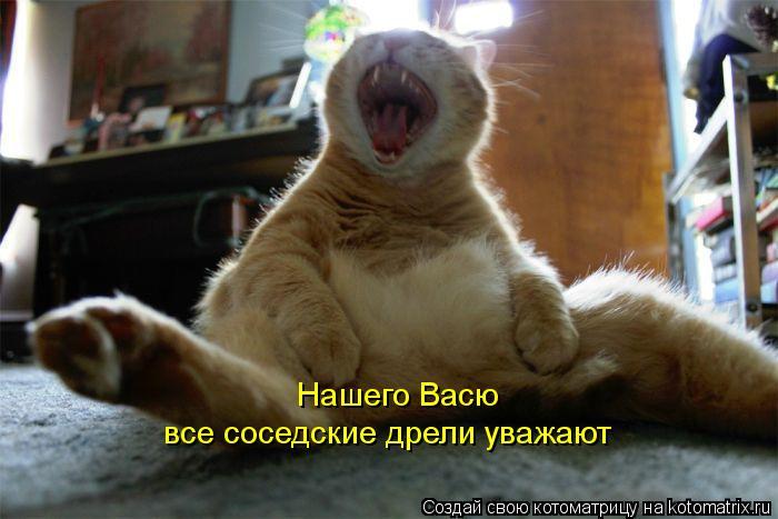 kotomatritsa_lv (700x467, 47Kb)
