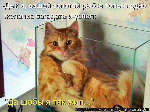 kotomatritsa_qi (640x480, 53Kb)