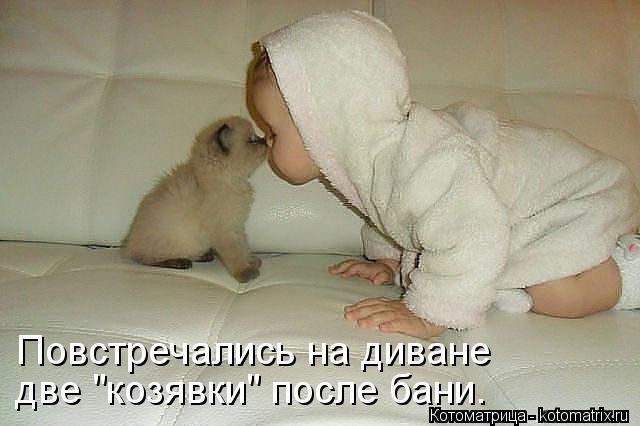 kotomatritsa_T2 (640x426, 37Kb)