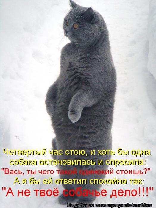 kotomatritsa_VN (524x700, 55Kb)