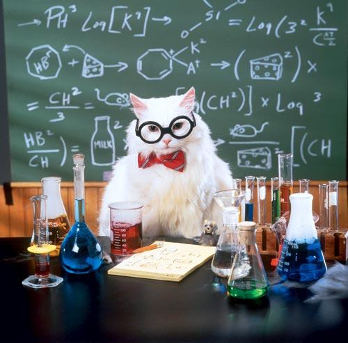 кот профессор (500x493, 43Kb)
