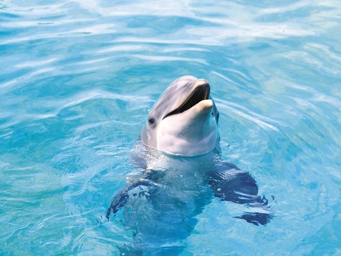 dolphin-b-1600 (700x525, 90Kb)