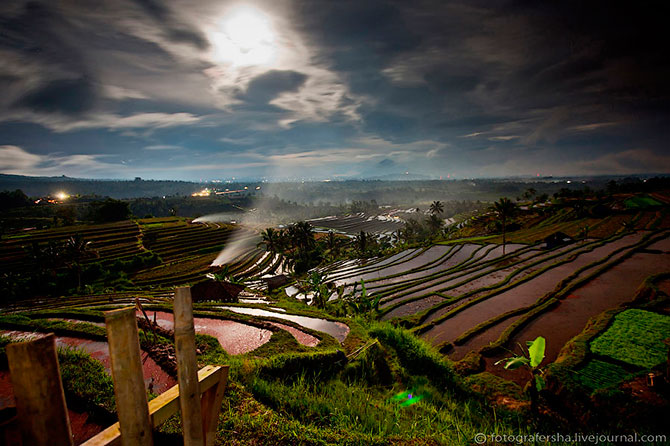 рисовые поля фото (670x446, 88Kb)