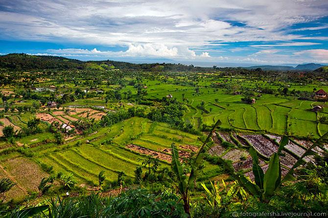 рисовые поля фото 2 (670x446, 145Kb)
