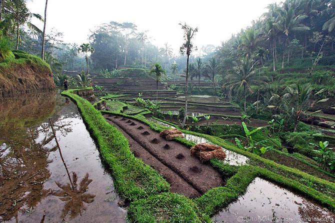 рисовые поля фото 4 (670x446, 133Kb)