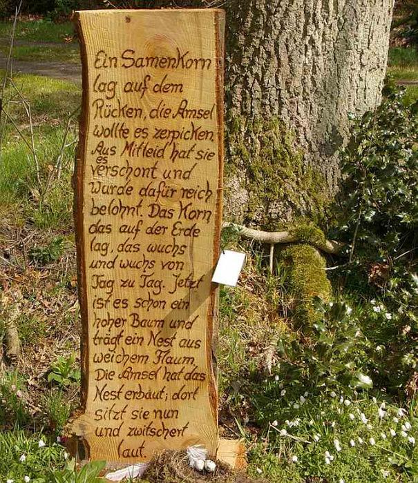 Рододендроновый парк-Westerstede Rhododendronpark. 98793