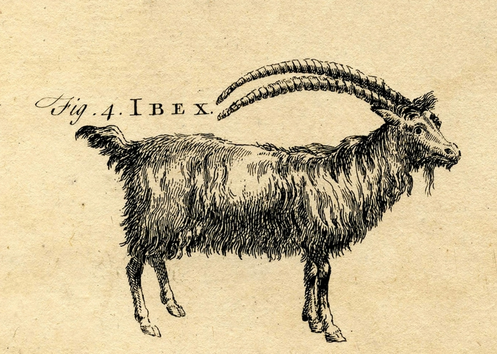 goat vintage images graphicsfairy3 (700x499, 327Kb)
