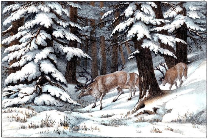 reindeer vintage image graphicsfairy006sm (700x469, 333Kb)