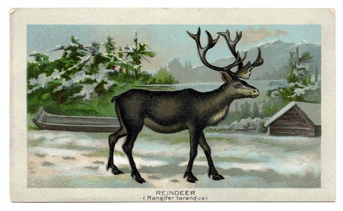reindeer-graphicsfairy010b (700x431, 255Kb)