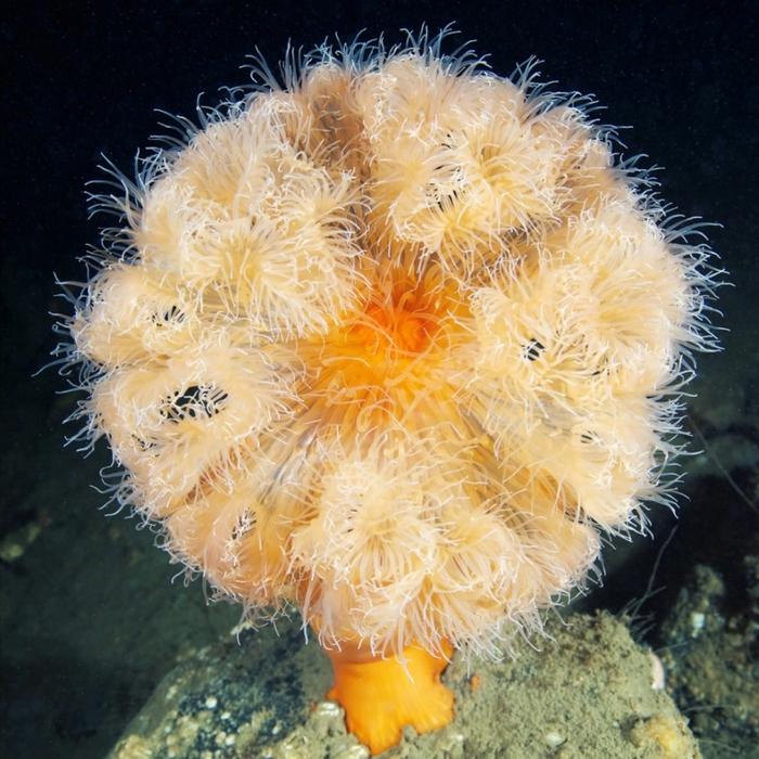морские организмы фото 13 (700x700, 376Kb)