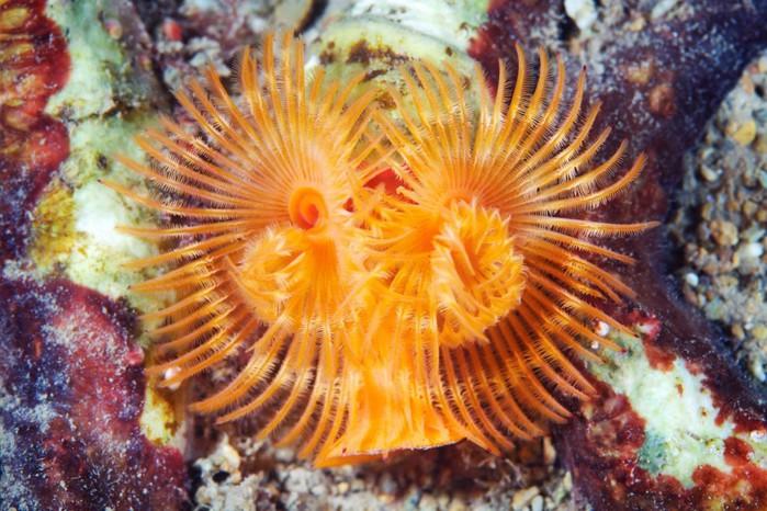 морские организмы фото 14 (700x466, 120Kb)