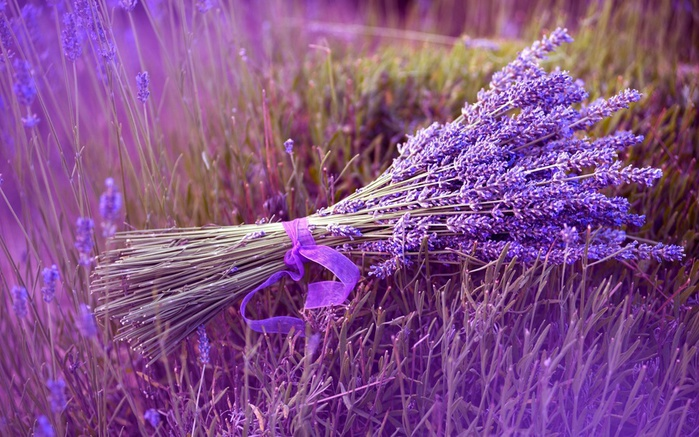 Найти цветок по картинке 5