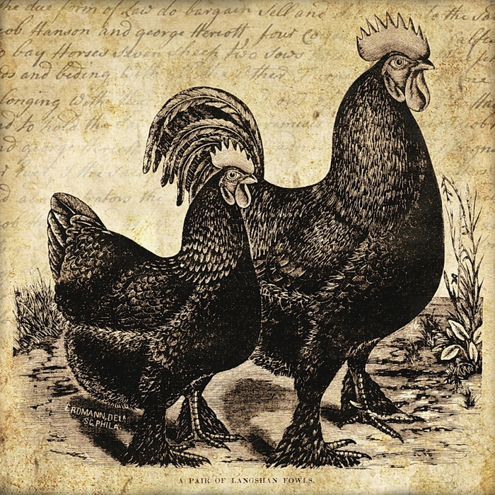 Rooster & hen 5x5 in ~ lilac-n-lavender (700x700, 521Kb)