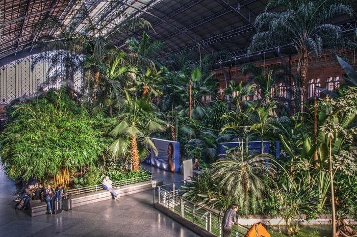 ботанический сад на вокзале аточа мадрид 1 (700x465, 173Kb)