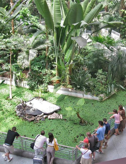 ботанический сад на вокзале аточа мадрид 5 (536x700, 250Kb)