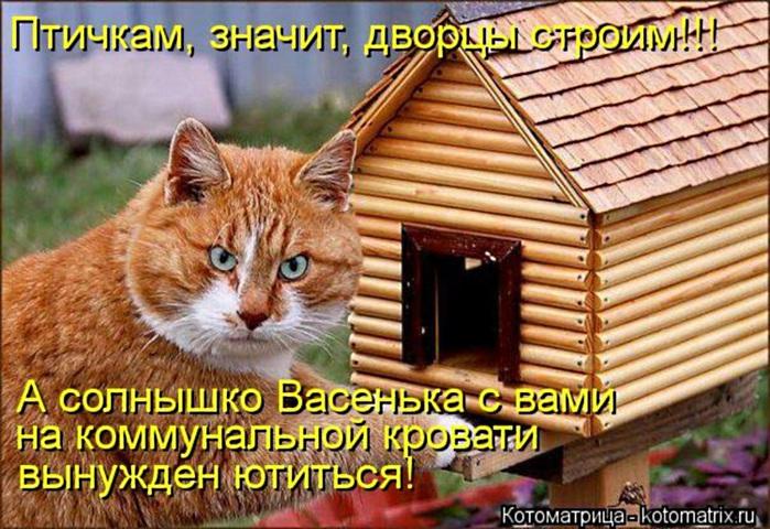 kotomatritsa_o2 (700x480, 157Kb)