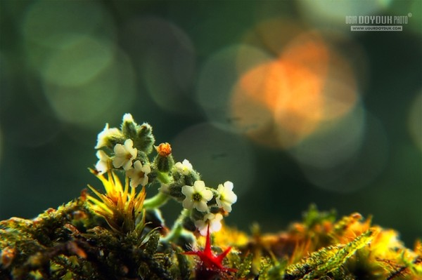 49012942_1253643028_Caterpillar_Flower_II_by_colorrrs (600x399, 45Kb)