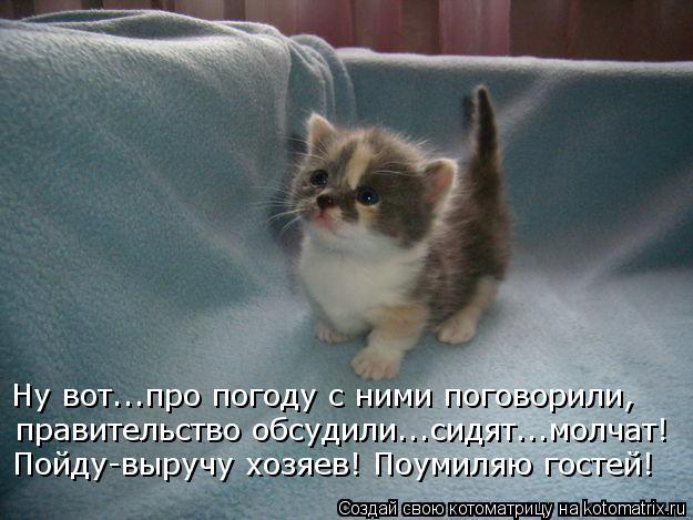 kotomatritsa_9i (625x469, 52Kb)