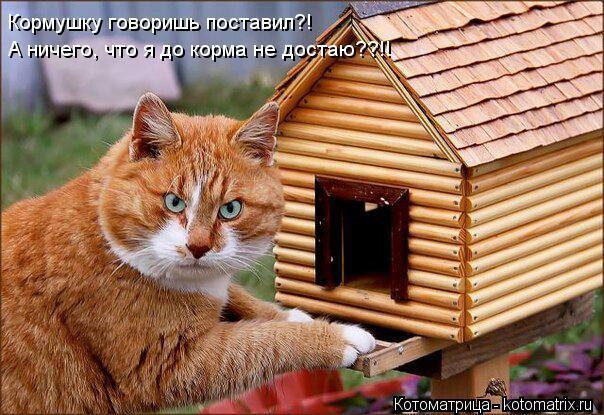 kotomatritsa_qK (604x415, 72Kb)