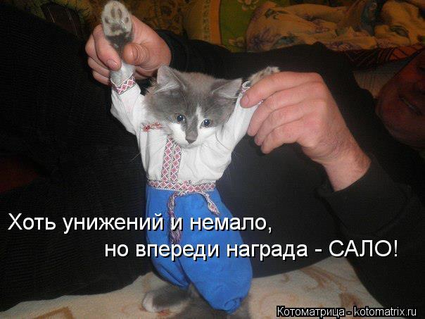 kotomatritsa_SR (604x453, 44Kb)