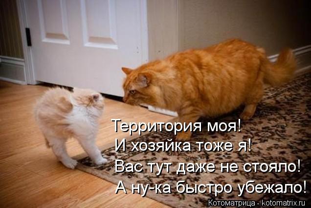 kotomatritsa_ug (636x425, 46Kb)