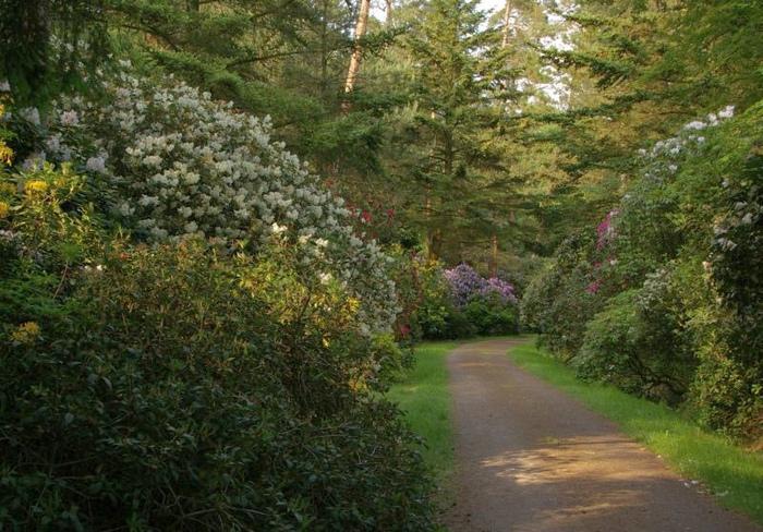 Рододендроновый парк-Westerstede Rhododendronpark. 14023