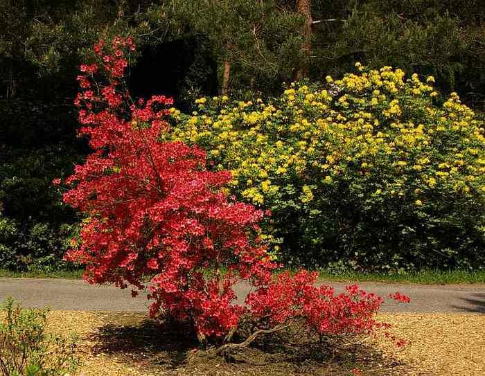 Рододендроновый парк-Westerstede Rhododendronpark. 53422
