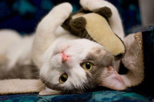 Коты и мягкие игрушки