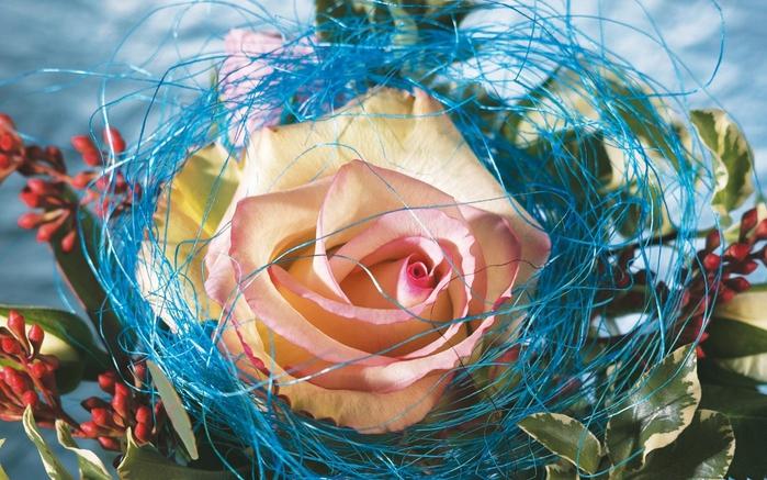 Смотреть картинки онлайн бесплатно цветы 6