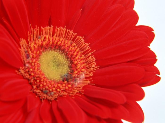 цветы (700x525, 215Kb)