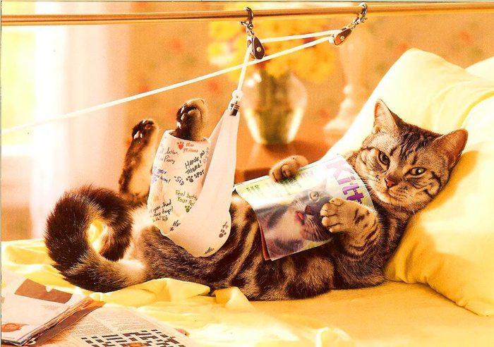 Кошки: факты и все о кошках - страница 71