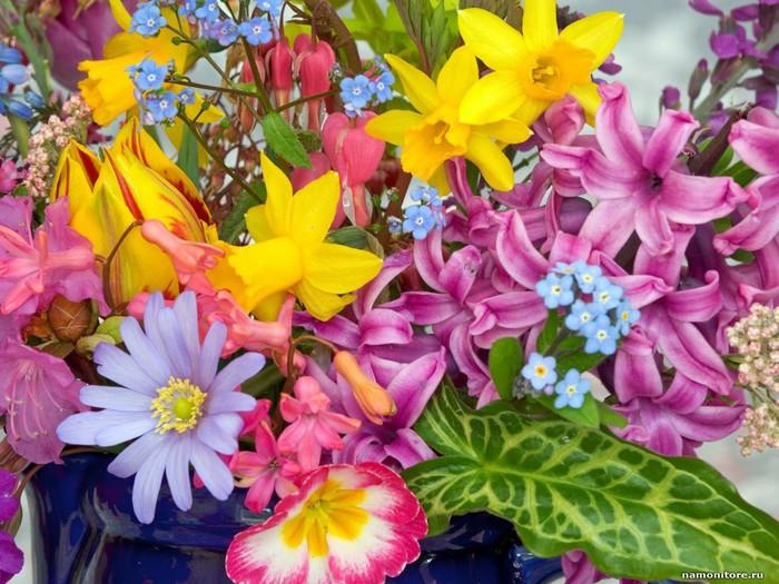 Яркие картинки цветов