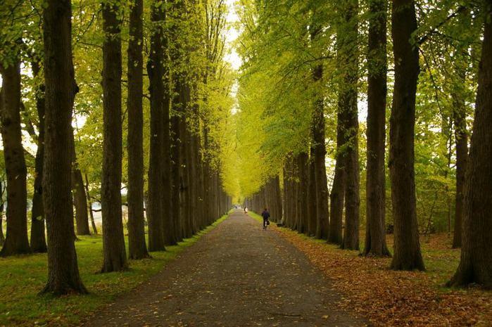 Фрисландия - часть 1. 46333