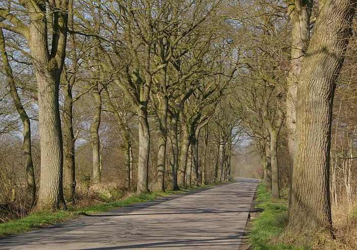Фрисландия - часть 1. 50668