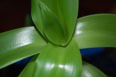 Фурункулы, или фурункулез - это кожное заболевание, связанное с воспалением волосяных мешочков и сальных желез...