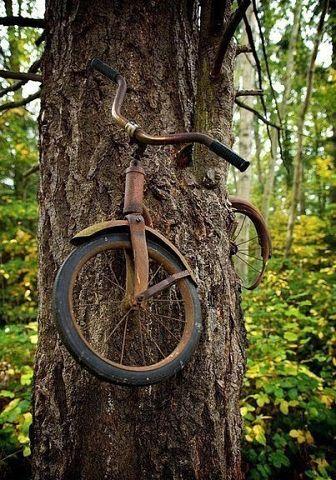 Мальчик оставил свой велосипед прикованным к дереву когда уходил на войну в 1914 году. Он не вернулся. Невероятно, но этот велосипед находится там уже 98 лет! (336x480, 59Kb)