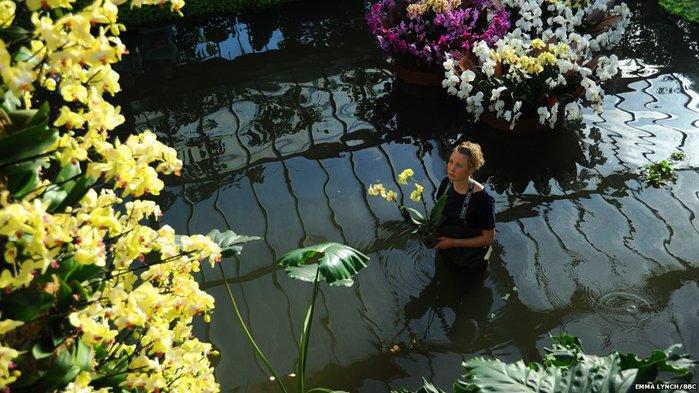 орхидеи (700x393, 87Kb)