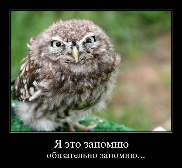3821971_demotivator0039 (600x552, 44Kb)