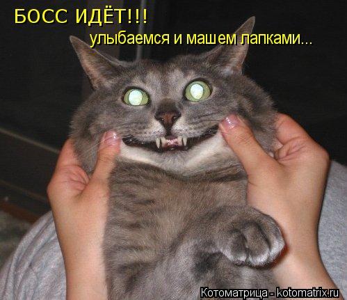 kotomatritsa_QU (499x431, 40Kb)
