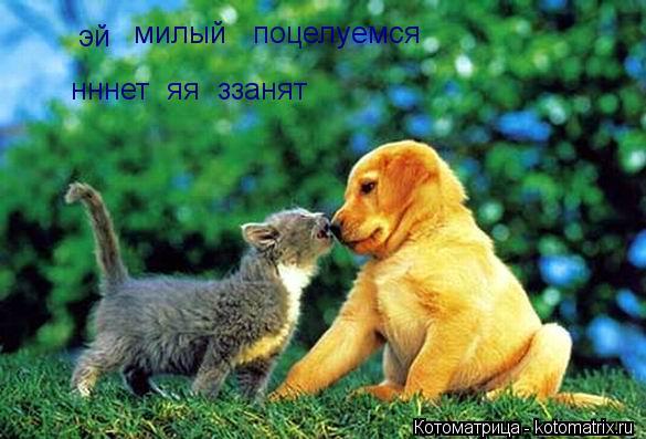 kotomatritsa_4G (585x397, 46Kb)