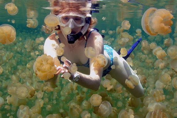 Необыкновенное  озеро медуз находится на архипелаге Палау в Тихом океане - фото 12