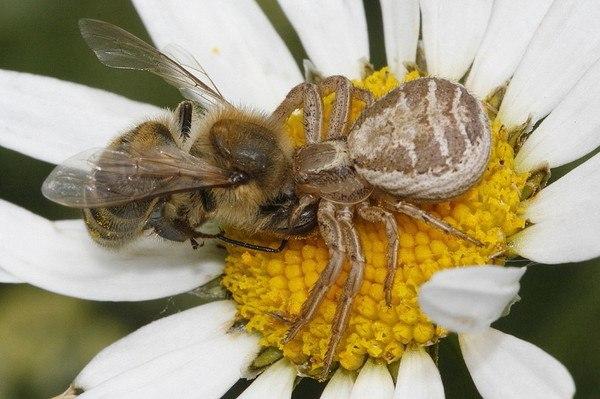 пчелка (600x399, 60Kb)
