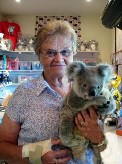 маленький коала фото (427x570, 72Kb)